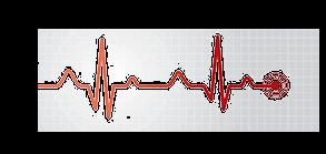 小动物心电图基础——导联系统、心电图的形成及平均电轴